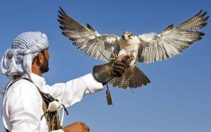 sharia UAE falcon