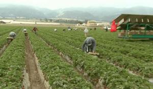 dinero y agricultura