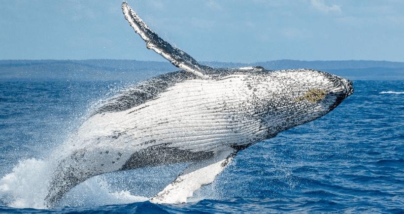 Bitcoin manipulado por ballenas